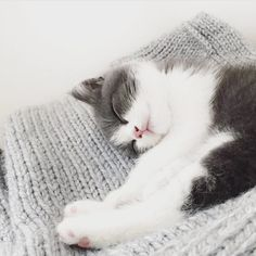 Me today, brewing on a cold, really not feeling up to much, other than cuddle up in the sofa, with my favourite knit wool blanket.  #regram @stitchandstory of their 9 week old kitten Bowser - how cute is he!?