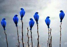 #pajaros #azul #blue
