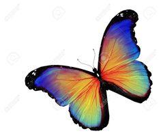 Mariposa Azul Amarillo Sobre Fondo Blanco Fotos, Retratos, Imágenes Y Fotografía De Archivo Libres De Derecho. Pic 14491019.