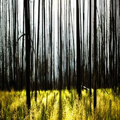 by Josh Blumental Glass Wall Art, Fused Glass Art, Landscape Photography, Art Photography, Kiln Formed Glass, Tree Forest, Beautiful Landscapes, Painting Inspiration, Wonders Of The World