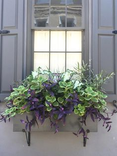 Since shade plants for window boxes are beyond the shelter of your house, it is just proper that outdoor flowers and plants are the ones which you require to pick. There's no issue with the space…More Window Box Plants, Fall Window Boxes, Window Box Flowers, Window Planter Boxes, Planter Ideas, Fall Flower Boxes, Window Sill, Flower Ideas, Outdoor Flowers