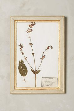 """Pressed Herb Wall Art - anthropologie.com """"These distressed cream frames with golden mats contain preserved herbs from the 19th century, which have been carefully mounted on antique paper with their accompanying French labels."""" <-- Not going to be able to get my hands on 19th century pressed herbs, but something to try to recreate?"""