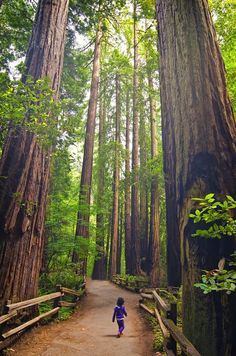 Standing Tall in Redwood Forest. California, USA.   http://www.lonelyplanet.com/usa/travel-tips-and-articles/68930