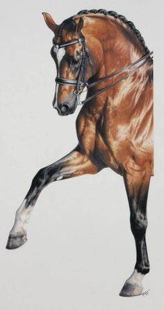 Horse Drawings, Animal Drawings, Black Pen Sketches, Horse Illustration, Horse Artwork, Most Beautiful Horses, Dressage Horses, Equine Art, Horse Pictures