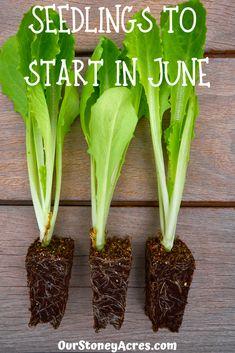 Veg Garden, Edible Garden, Vegetable Gardening, Veggie Gardens, Fruit Garden, Garden Plants, House Plants, Container Gardening, Gardening Tips