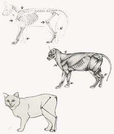 猫の絵を描く.com 猫の骨格と筋肉を学ぼう♪
