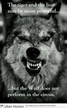 Wolf Pack With Its Quotes. QuotesGram