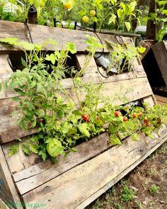 The Most Perfect Raised Garden Beds Made out of Pallets Pallet Planters Compost Bins Herb Planter Box, Herb Planters, Pallet Planters, Pallet Fence, Diy Pallet, Grape Trellis, Grape Arbor, Pallet Greenhouse, Pallets Garden