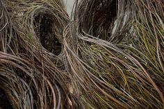 Shindig, Patrick Dougherty,  2015. Willow saplings. Renwick Gallery, Washington DC