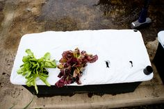Earthbox gardening, I definitely want to give this a try!