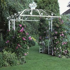 White metal arbor, with trained Rosa 'Alexandre Girault' giving it a touch of color.