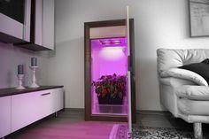 Mini Greenhouse, Greenhouse Plans, Garden Pool, Indoor Garden, Grow Cabinet, Indoor Farming, Led, Grow Your Own, Yin Yang