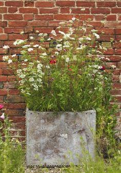 Pots for pollinators | Gardens Illustrated
