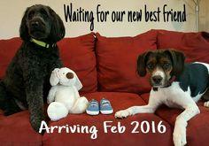 Dog pregnancy announcement idea