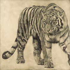 Siberian Tiger I / Panthera tigris altaica / 2008 / 100 x 100 cm / Pencil on panel