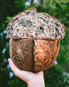 Tahini, Sesame, Honey Sourdough - not my first loaf! Sourdough Recipes, Sourdough Bread, Bread Recipes, Cooking Recipes, Savoury Baking, Vegan Baking, Bread Baking, Tahini, Bread Bun