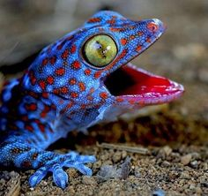 SUCH A HAPPY GUY......I don't generally like reptiles.....but you can't help but like this little guy!
