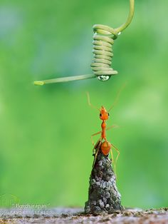 That moment when you Head up and Reach out for it | by Handri Fitrido