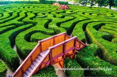 The world's longest hedge maze. It's nearly two miles long, boasts over 16,000 yew trees and is sprawled out over 1.5 acres of Wiltshire countryside. Discovered by Aileen Pinkihan Bulahao at Longleat Hedge maze, Horningsham, #England #travel