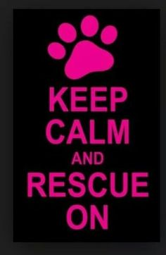 Adopt, Transport, Volunteer, foster, or cross post on social media to help rescue/shelter animals