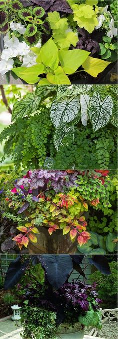 How to create beautiful shade garden pots using easy to grow plants with showy foliage and flowers. And plant lists for all 16 container planting designs! - A Piece Of Rainbow #FlowersPlantsLove