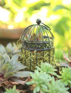 mini bird cage planter + a whole bunch of creative ideas for succulent containers.  #succulents #ad
