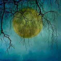 Oak moon by borealnz