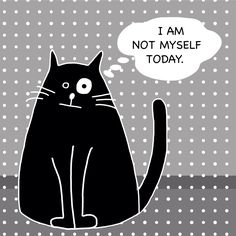 I am not myself today. Funnycat cat