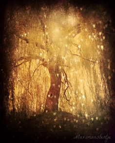 Magical Tree Hearts - Fine Art Photography 8x10 - Dreamy Forest Golden Light - Lone Tree Branches - Tonight, Tonight @http://www.etsy.com/shop/Maximonstertje