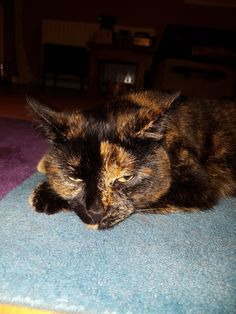 Check out Facebook page.. Baba Vanga The cat