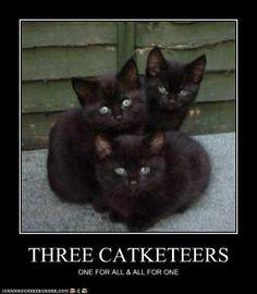 The Three Catketeers