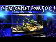Aquariums, Aquarium Terrarium, Pipes, Products, Animaux, Tanked Aquariums, Fish Tanks, Fish Tank