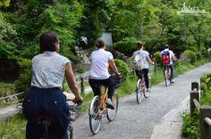 Велодороги пролегают по живописным местностям среди лесов и парковых зон, вдоль пляжей и городских кварталов.