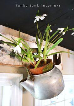 Ze staré konvice, závěsný květináč :)