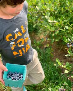 Hand picked blueberries, anyone?