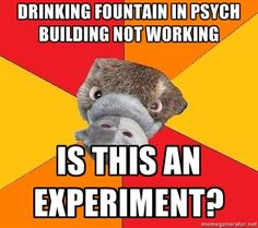 Hah! Every time something goes awry in any situation where data could be collected I assume there could be an observational study going on (Not experiment). But this psychology platypus meme is brilliant.