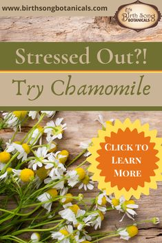 When you are feeling overwhelmed and stressed out you need support to help you ground and find your center. Chamomile is one of the most relaxing and powerful herbs I know to help you do that. Learn more about how chamomile can support you to relax and find serenity. #stress #anxiety #Chamomile Anxiety Relief, Stress And Anxiety, Birth Art, Pregnant And Breastfeeding, Birth Doula, Menstrual Cycle, Have You Tried, Stressed Out, Healthier You