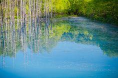 生い茂る緑と青い空が水面に反射し、生き生きとした夏の青池。 水面に映るグリーンと池のブルーが混ざり合うグラデーションがとても美しいです。