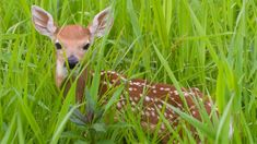 Found an orphaned or injured baby wild animal?   The Humane Society of the United States Baby Wild Animals, Green Grass, Humane Society, Habitats, Animal Pictures, Kangaroo, Wildlife, United States, Abandoned
