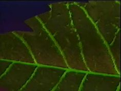 Video clip illustrating the process of transpiration