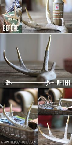 The Blissful Bee's discussion on Hometalk. Updating Antlers With a Gold Twist! - Do you have some old antlers lying around? Update them to a modern look with some gold spray paint! Antler Crafts, Antler Art, Deer Horns, Deer Skulls, Painted Deer Antlers, Antler Centerpiece, Pot Pourri, Skull Painting, Gold Spray Paint