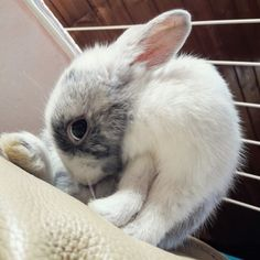 Cookie, our cute bunny