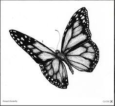 Monarch Butterfly by Nicole Fazio (see: http://www.nicolefazioillustration.com/illustration/)