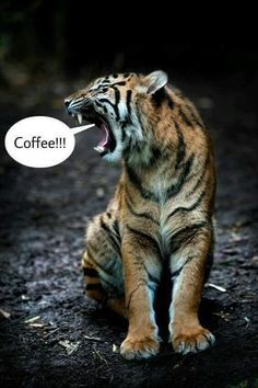 Tiger Fotografie, Killing Rats, Tiger Photography, Kung Fu Panda, Animals Beautiful, Animation, Cats, Image, Dreamworks