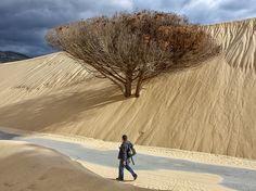 Imagen de un hombre que camina junto a un árbol engullido por una duna de arena en Tarifa, España