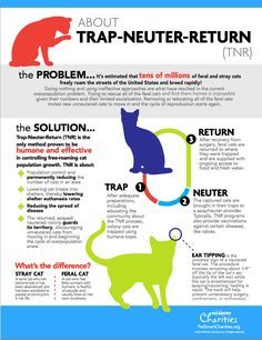 Learn all about Trap-Neuter-Return with this helpful infographic.