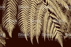 New Zealand Silver Fern Background in a Minimalist Monochrome Style royalty-free stock photo Silver Fern, Monochrome Fashion, Abstract Photos, Image Now, Ferns, Fashion Photo, Animal Print Rug, New Zealand, Filter