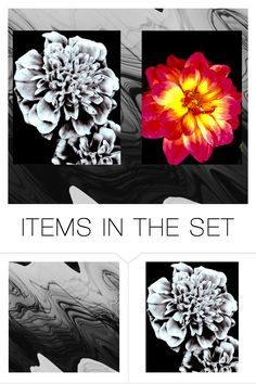 """""""My photography!"""" by unique-heart4style ❤ liked on Polyvore featuring art"""