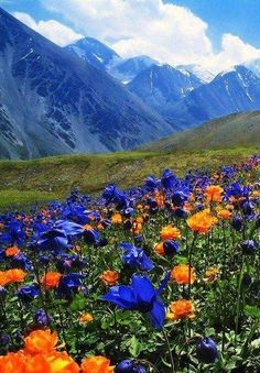 Я Лечу Душу + 3 D Image Nature, All Nature, Amazing Nature, Beautiful World, Beautiful Places, Beautiful Flowers, Landscape Photography, Nature Photography, Altai Mountains