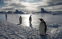 penguins waiting around